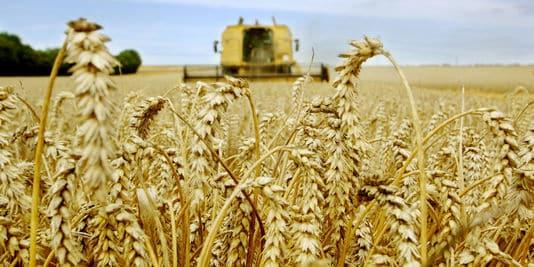 investir dans le blé